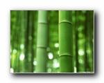 竹林深处专集壁纸