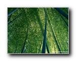 竹林深处竹子壁纸(共2063次)