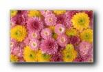 20寸宽屏-鲜花锦簇(共3560次)