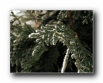 绿色的冬天