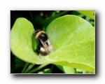 蜜蜂(多分辨率)