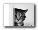 高清动物壁纸 1600*1200(共7464次)