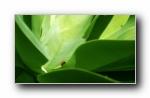 甲虫 精选壁纸