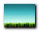 GrassBlades 精选壁纸