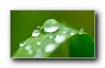 绿草上的水滴 (多分辨率)