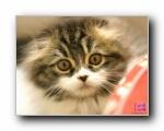 可爱猫咪壁纸(共2756次)