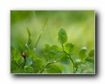 绿叶上的甲壳虫 精选单张壁纸
