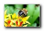 高清精美植物微距摄影壁纸 2008/(共2114次)