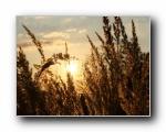 光芒的稻草(多分辨率)