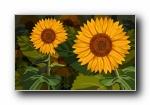 Photoshop设计花朵壁纸