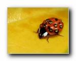 三张甲虫精美壁纸 (多分辨率)