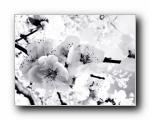 精美高清植物花卉壁纸 (多分辨(共3009次)