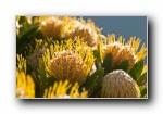 微距植物摄影高清壁纸(共3816次)