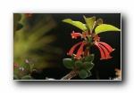 高清花卉花朵摄影宽屏壁纸(共2982次)