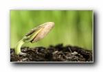 新芽嫩叶高清绿色植物壁纸(共6781次)