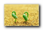 新芽嫩叶高清绿色植物壁纸(三)(共23971次)