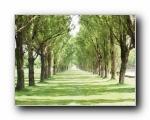 草原,田园,植物绿色高清壁纸(共10231次)