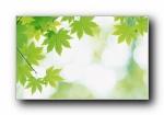 夏日气息:阳光水滴,清新绿叶高(共6584次)