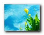 精选热门植物花朵高清壁纸 2009/(共3124次)