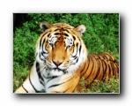 猫科动物高清壁纸(共2035次)