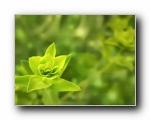 清新绿色植物壁纸(共2976次)