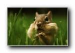 花栗鼠可爱摄影壁纸(共1929次)