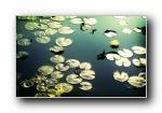 高清植物宽屏壁纸 2009/07/01(共2985次)