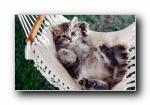 动物精彩瞬间 摄影宽屏可爱壁纸(共6226次)