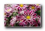 高清宽屏单反摄影花卉花朵壁纸 2(共3804次)