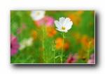 盛放的花朵高清宽屏壁纸 2560x16(共5592次)