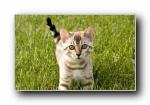 世界名猫宽屏高清壁纸(共4488次)