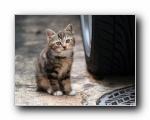 街角的小猫咪摄影高清壁纸(共2381次)