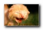 绿草上的可爱小猫咪宽屏壁纸(共2768次)
