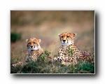 高清精美动物生物壁纸(一) 160(共2940次)