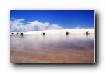 经典精美风光风景动物生物摄影高清宽屏壁纸(十三)