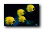 精美热带海底世界高清宽屏壁纸(共5001次)