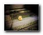躺在木板上的花 (多分辨率)