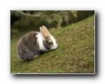 可爱小兔子(多分辨率)