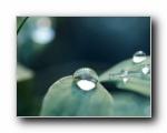 绿叶上的水珠(多分辨率)
