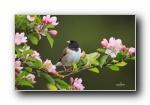 野生小鸟摄影宽屏壁纸