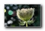 《德国之夏》昆虫鲜花摄影宽屏壁纸