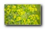 小清新:田园植物摄影朦胧宽屏壁纸