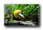 《小蘑菇》宽屏壁纸