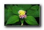 《印第安花园》小小小花朵宽屏壁纸