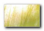LG V10 手机宽屏壁纸