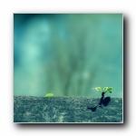 蓝调植物野草(多分辨率)